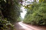 o caminho na floresta