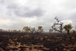 queimada na savana