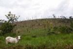 às margens da Transamazônica