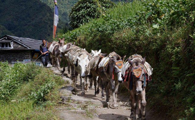 Comboio, Khumbu