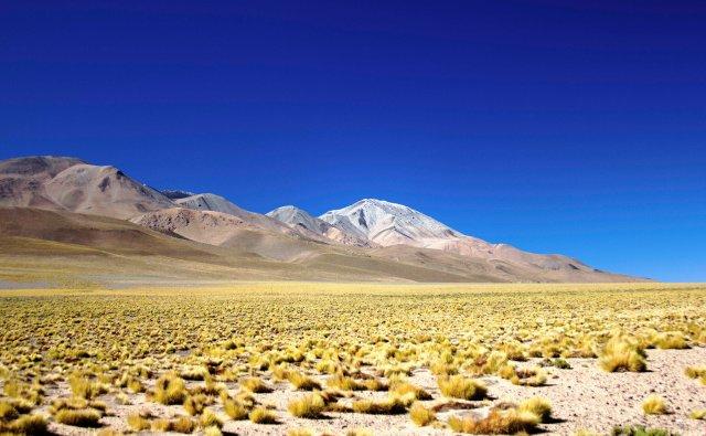 tapete dourado da Puna na província de Catamarca